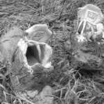 2004 - new trainers - Casualties of Water