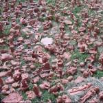 Clay sculptures.