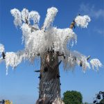 Coolest Tree at Glasto